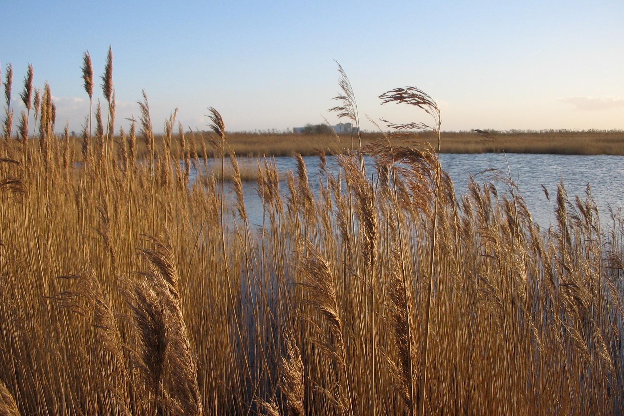 Plan programme de gestion milieu aquatique - Zone de frayère