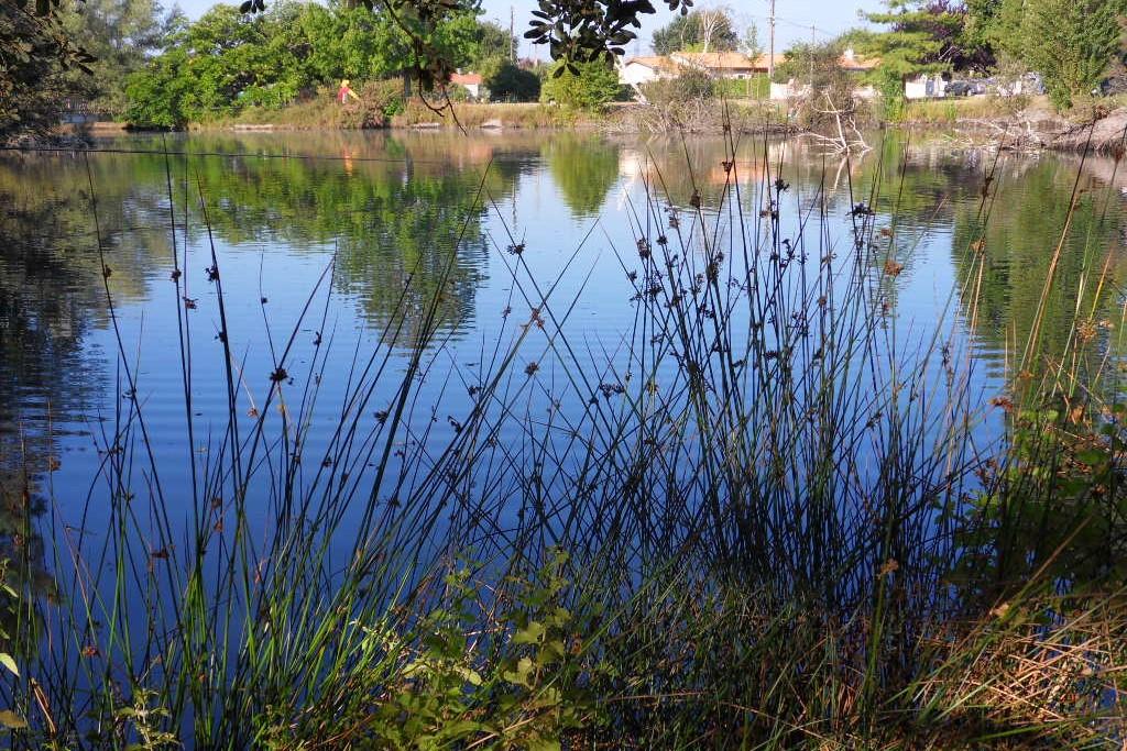 Stratégie territoriale - Restauration de plan d'eau en génie écologique