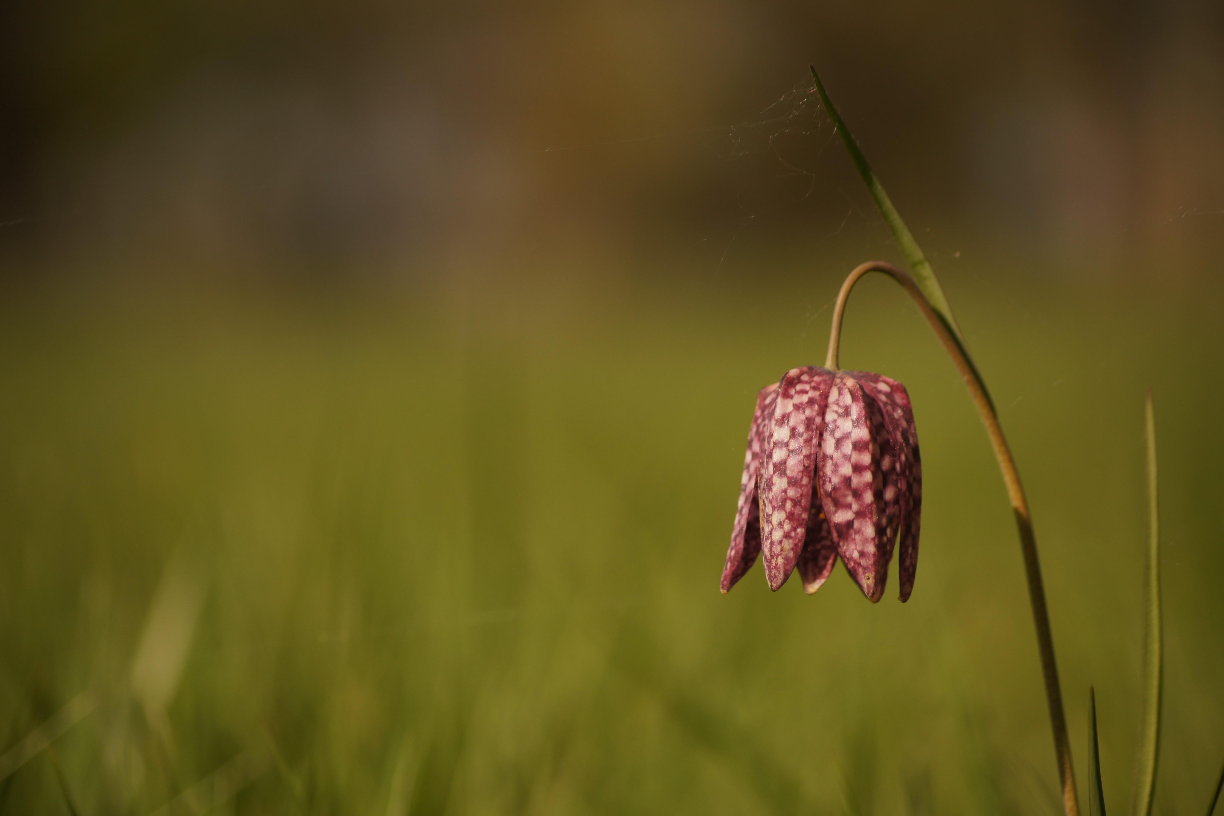 Expertise naturaliste - flore patrimoniale