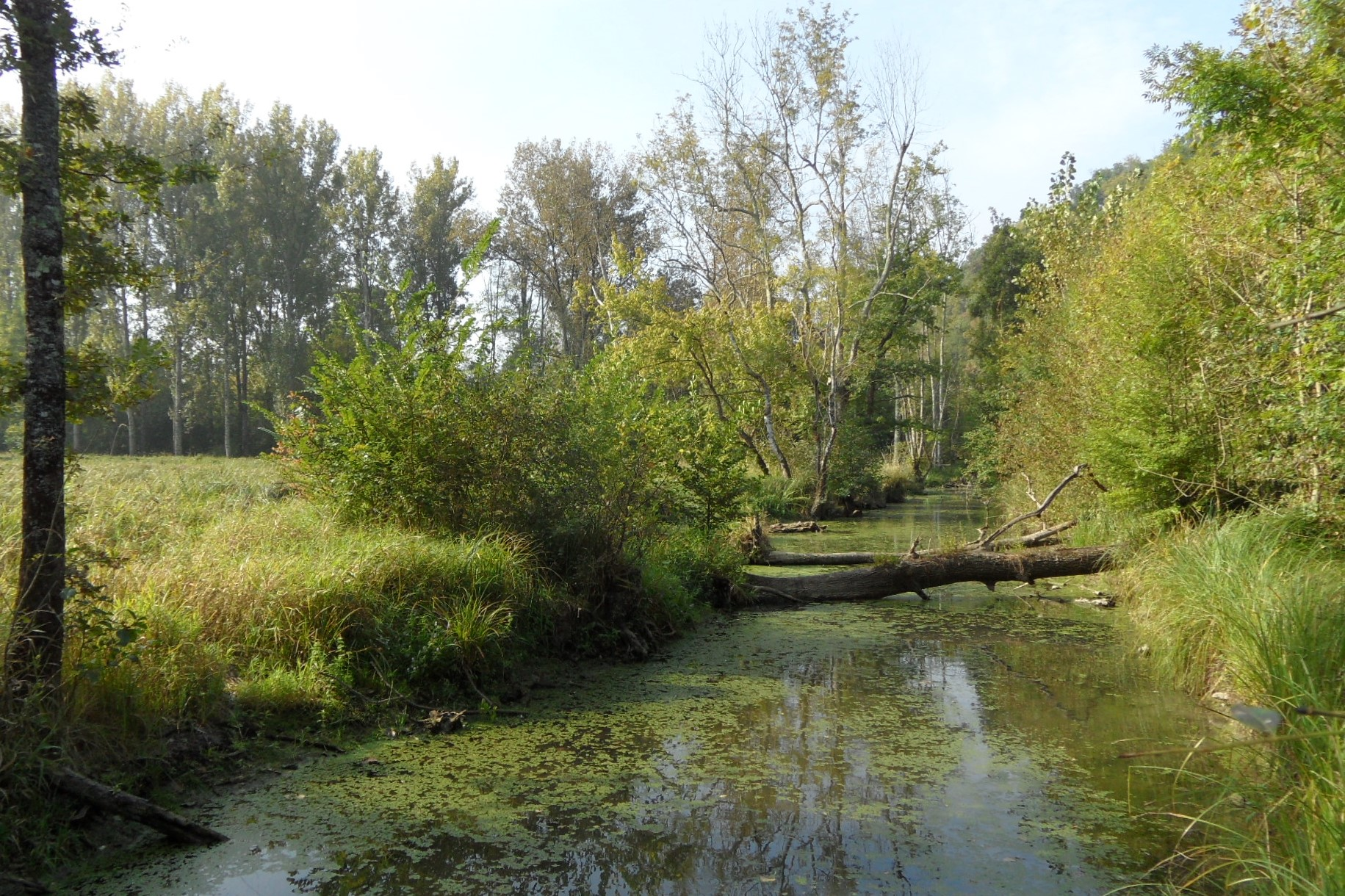 Plan programme de gestion bassin versant et réseau hydrographique